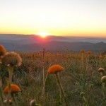 Mt Buller - summer sunset and meadow